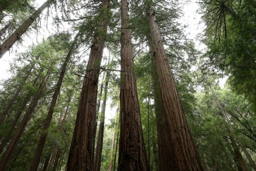 California's Forest Climate Program Could Actually Be Increasing CO2 | KQED