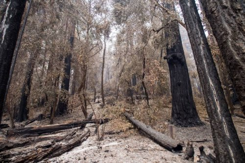 Last Year's Santa Cruz Lightning Fires Still Causing Trouble | KQED