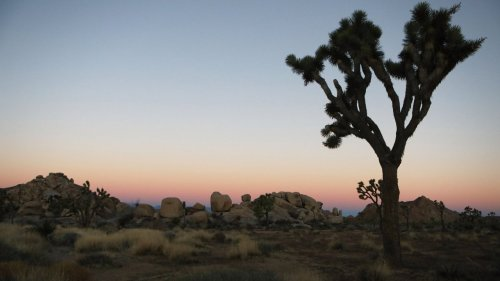 Search for missing man ends after body found in Joshua Tree National Park