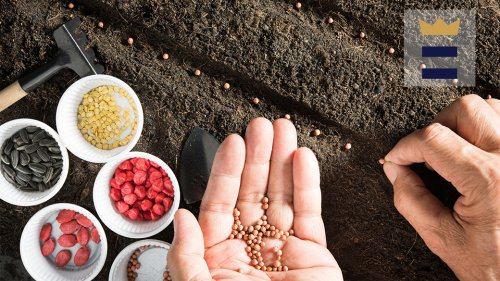 Best vegetable seeds to plant in spring