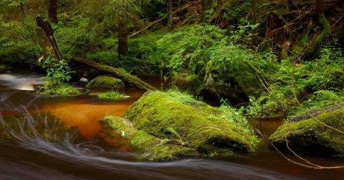 Sehnsucht Urwald: Waldbaden mit dem Naturfotografen im Waldviertler Hochland