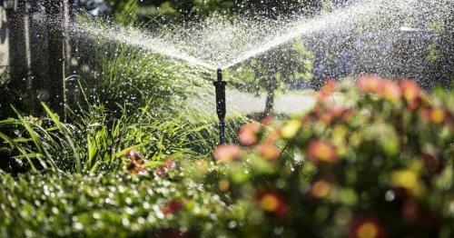 So überleben Pflanzen den Urlaub: Praktische Bewässerungssysteme