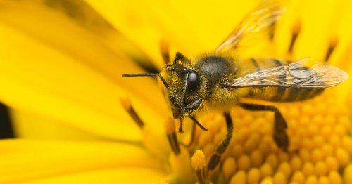 Bestäubung: Wo Bienen ihre Arbeit an Fledermäuse abgeben