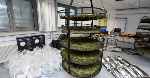Cannabis-Aufzucht ausgehoben