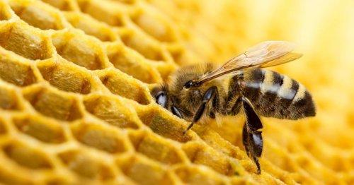 Das Ende des Bienensterben und der Boom der Imkerei