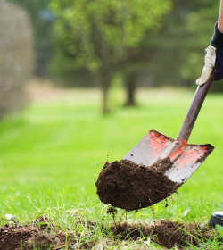 LG&E and KU Foundation awards tree planting grants to 23 organizations across Commonwealth