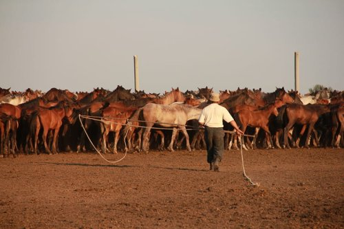 Resuelven el misterio de la domesticación de los caballos modernos, y cómo se extendieron por el mundo
