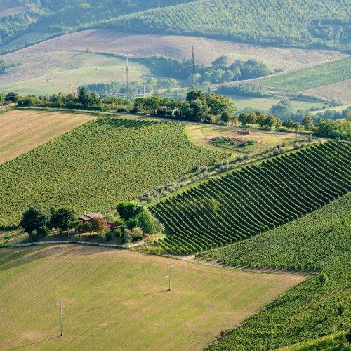Sangiovese, Romagna's Timeless Native Grape