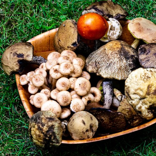 Mushrooms: How To Choose & How to Cook