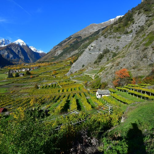 The Discreet Wines of Valle d'Aosta