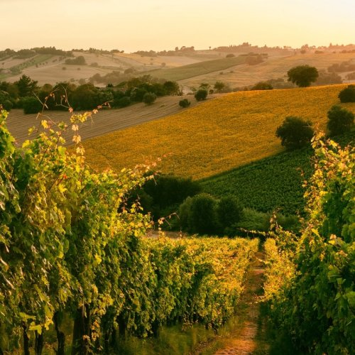 4 Wines of Le Marche Worth Tasting