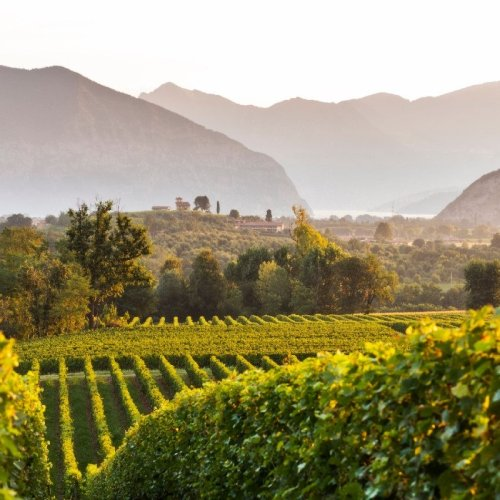 A Thousand Ways to Experience Franciacorta This Summer