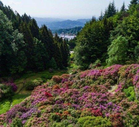 Weekend fuori porta: la Conca dei Rododendri all'Oasi Zegna