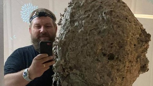 Pest Controller Finds 3ft Wasps' Nest That Was Home To 75,000 Insects