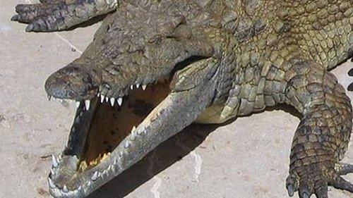 Crocodile Named After Osama Bin Laden Killed 80 People In Uganda