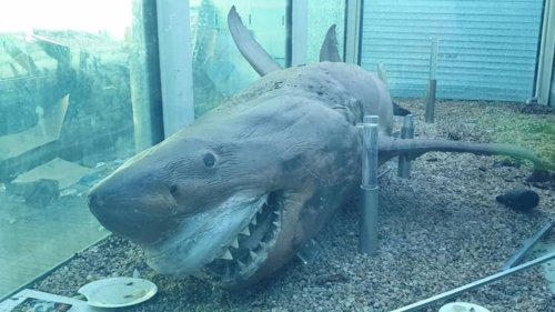 Abandoned Zoo Still Has Great White Shark Remains Floating In Tank