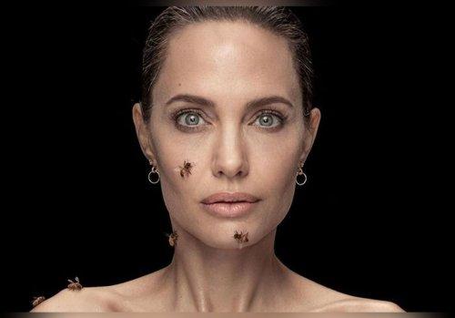 Angelina Jolie couverte d'abeilles… La photo choc et glamour alerte pour envoyer un message fort