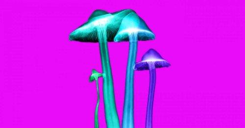 La psilocybine des champignons hallucinogènes qui soigne la dépression