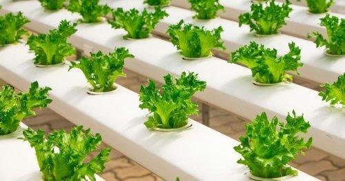 Et si l'on autoproduisait nos légumes ? - Et demain notre ADN