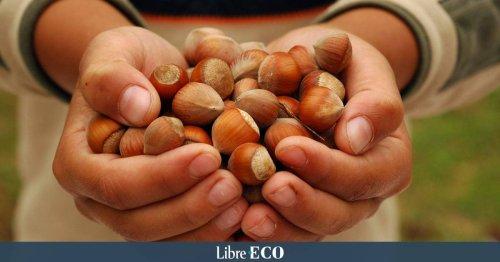 Nutella : Les producteurs de noisettes de Turquie dénoncent les méthodes de Ferrero