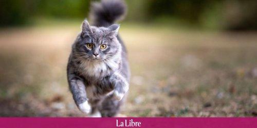 Pourquoi aucun athlète olympique ne courra jamais plus vite que votre chat