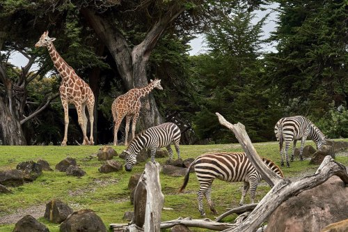 Lancashire has one of the best zoos in the country - can you guess where it is?