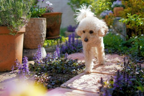 Blackburn experts warn which flowers are poisonous to pets