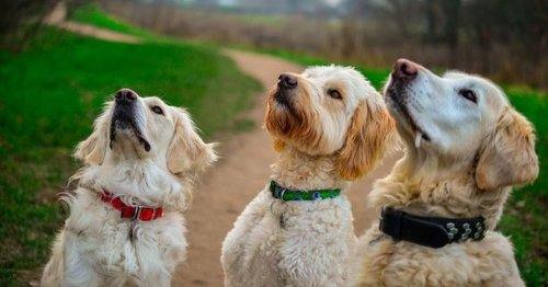 Canine body language expert on 7 ways to know what your dog is thinking
