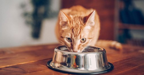 Cat foods urgently recalled over link to fatal illness outbreak