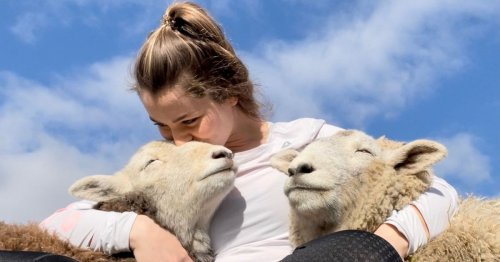 Adorable Lake District sheep who love to cuddle guardian who saved their lives