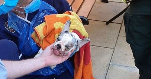 Puppy yelped in distress after getting mouth stuck on garden hook