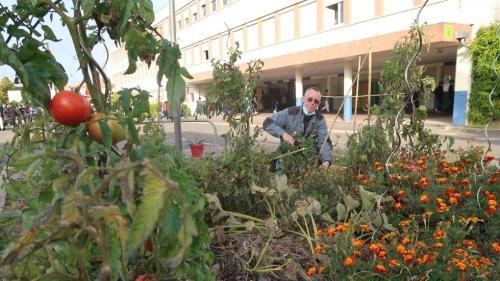 Joué-lès-Tours : le jardin du collège de l'Arche du Lude ravit les papilles des élèves
