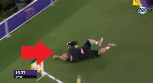 Video: Handler trips, nearly falls on dog Ripple at Westminster agility competition