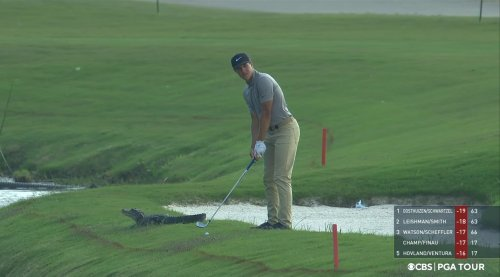 Look: Zurich Classic golf tournament is dealing with a family of gators
