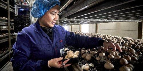 Le champignon, symbole de relocalisation en Haute-Loire pour le Breton Legulice