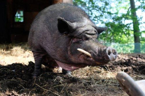 Den inneren Schweinehund zähmen - die 10 besten Tipps - Lauffreundin