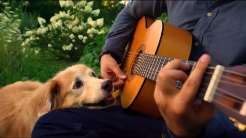 Musician Says Goodbye to His Beloved Dog With a Beautiful Acoustic Cover of 'What a Wonderful World'