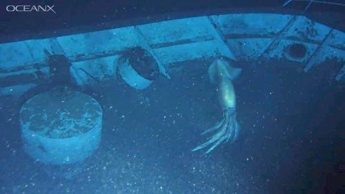 OceanXplorer ROV Captures Sight of Massive Squid Exploring a Shipwreck at the Bottom of Red Sea