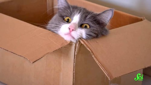 Scientists Recruit People to Conduct Home Experiments to See Why Their Cats Like to Sit Inside of Boxes