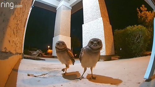 Small Flock of Night Owls Throw a Porch Party That Triggers a Newly Installed Video Doorbell at 10:30 PM