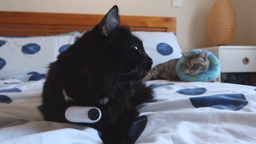 Man Attaches a Tiny Camera to His Cat's Collar for 24 Hours to Reveal His Kitty's Secret Life