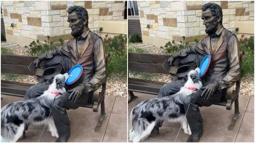Lively Border Collie Repeatedly Tries to Play Frisbee With a Seated Statue of Abraham Lincoln