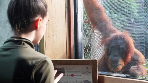 Chester Zoo: Endangered animals in 'last chance saloon' due to lack of Govt funding