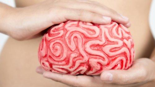 Cerveau, intestins et humeur : l'étonnante découverte de chercheurs de l'Institut Pasteur