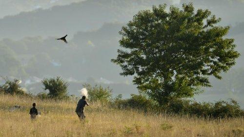 Le gouvernement veut ré-autoriser des chasses traditionnelles d'oiseaux
