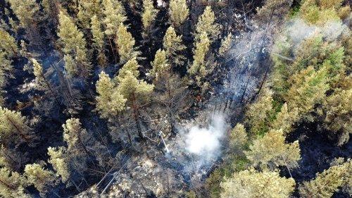 Déforestation, exploitation, incendies... Certaines forêts émettent désormais plus de carbone qu'elles n'en ont absorbé en 20 ans