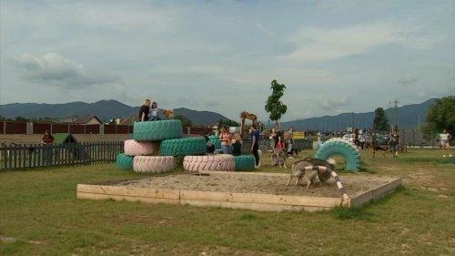 Haut-Rhin : à la découverte du Doogo club, un parc de loisirs pour chiens