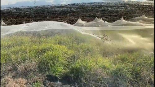 Australie : après les intempéries, le pays doit faire face à une invasion de souris et d'araignées