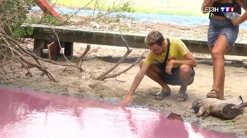 La mangrove du Diamant, en Martinique, vire au rose