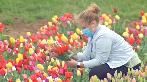 Des fleurs en libre cueillette : le concept original d'un agriculteur dans le Bas-Rhin